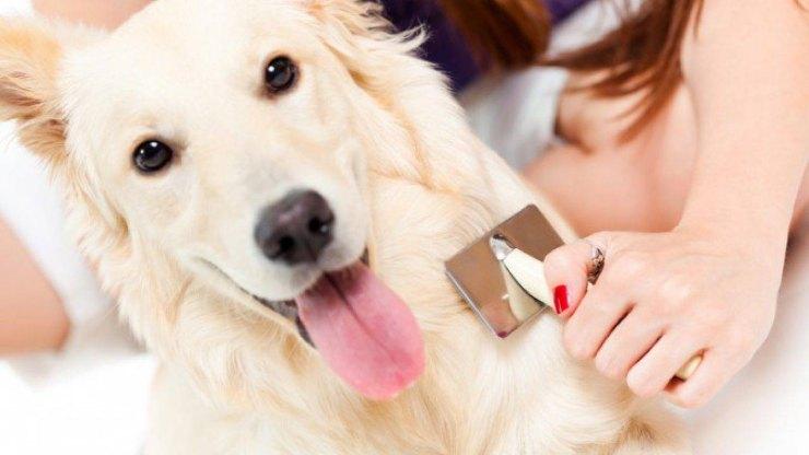 5 consigli per risparmiare sui veterinari