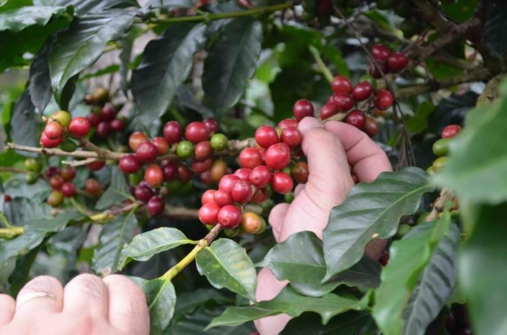 aumento di zucchero e caffé